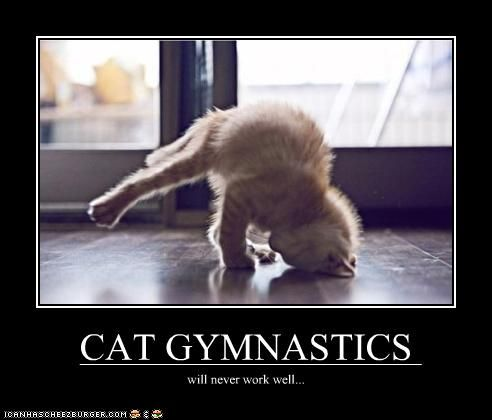 15 best gymcats images on pinterest  funny stuff