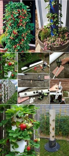 Muur of toren van aardbeien maken
