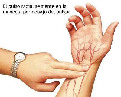 El pulso radial...