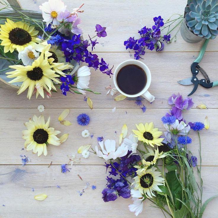 It's Monday .... a bank holiday here in the UK, only 2 weeks of summer school holidays left and the very last week of August 2016!  Where is time going  and Panic ... what will I do when all the flowers have gone?