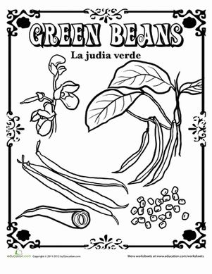 From seed to flower to ripe, take a look at the green beans in this coloring page and brush up on English and Spanish vocabulary!