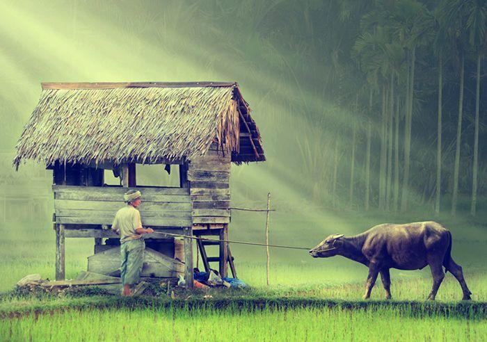 Ubud, five tips by … - Nomad & Villager