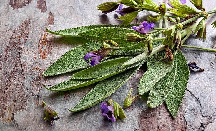 Herbs for menopause are generally well tolerated and, do not simply relieve hot flashes and discomforts; they can increase health and prevent illness.