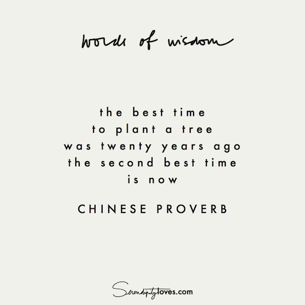 the best time to plant a tree was twenty years ago. the second best time is now // chinese proverb // NEVER TOO LATE — Serendipity Loves