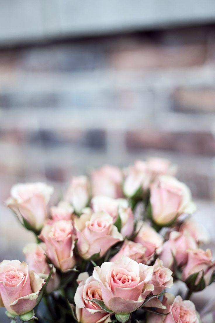 Zaplanuj Wesele - Blog Ślubny
