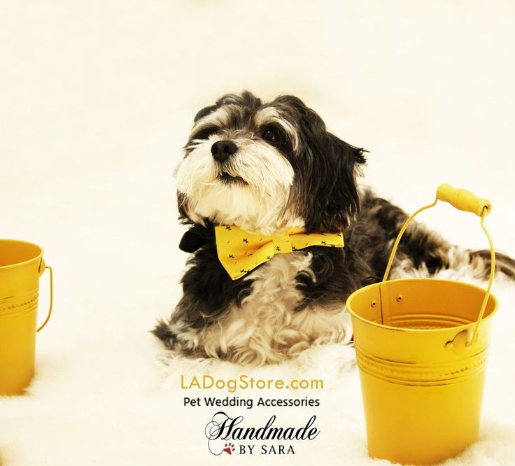 Yellow Dog Bow tie attached to collar, Dog birthday gift, Yellow-Navy, Dog lovers