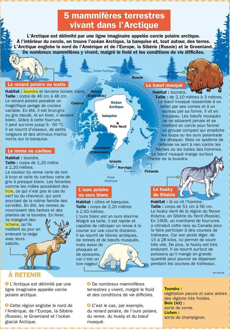 5 mammifères terrestres vivant dans l'Arctique