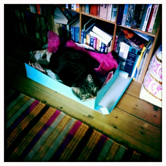 In her favourite shoe box, even if it is a couple of sizes to small ;-)