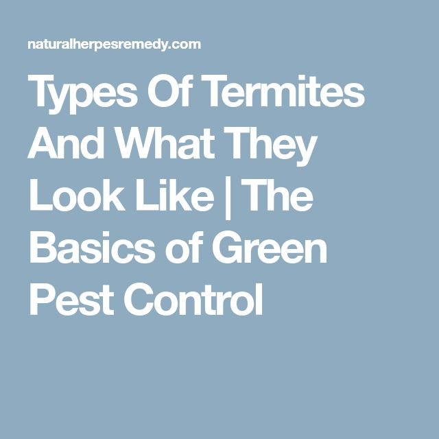 Types Of Termites And What They Look Like | The Basics of Green Pest Control