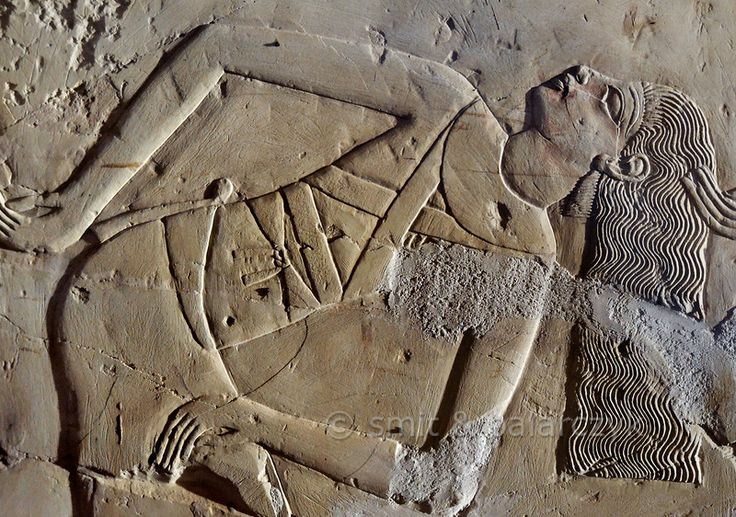 The Curse Of King Tuts Tomb Torrent: 875 Best Images About Egypt On Pinterest