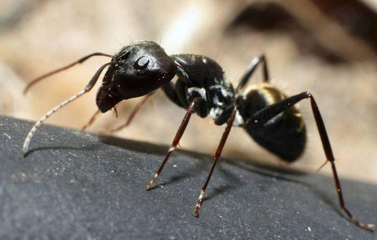¿A qué saben las hormigas? Averígualo, aquí: http://www.sal.pr/?p=100351