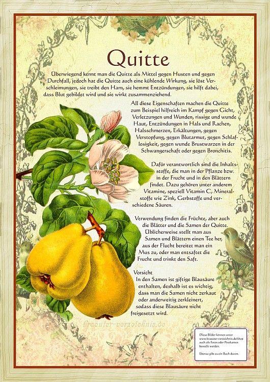 Quitte                                                                                                                                                                                 Mehr