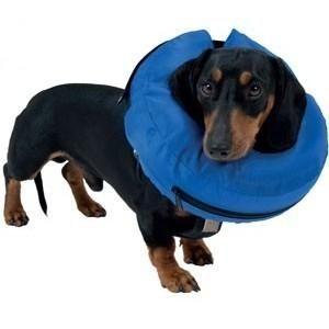 Collar #inflable para perros y gatos. Alternativa a los clásicos #collares #isabelinos. Súper comodos y prácticos para perros recien operados o con heridas.