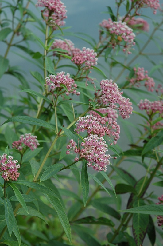 31 Best Minnesota Native Plants Images On Pinterest