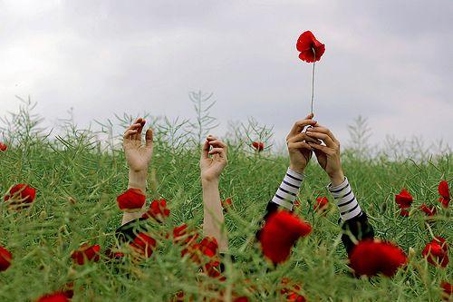 .Photos, Inspiration, Red Flower, Art, Perception, Poppies, Rona Keller, Photography, Fields