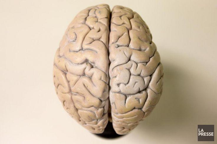 #Commotion cérébrale dans le sport: récupération plus lente qu'on ne pense - LaPresse.ca: LaPresse.ca Commotion cérébrale dans le sport:…