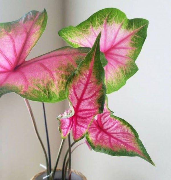 Gambar Bunga Hias Dari Sabun Bunga Tercantik Terindah Di Dunia Tanaman Hias Bunga Jenis Jenis Macam Macam Bunga Gambar Bunga Gambar Bunga Bunga Bunga Cantik