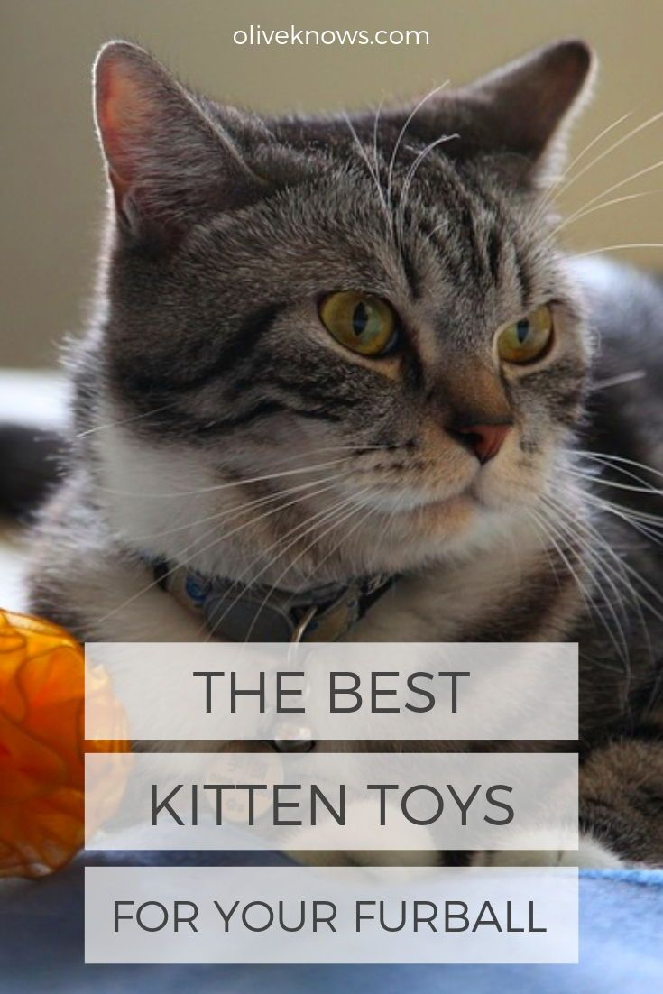 The Best Kitten Toys For Your Furball Oliveknows Best Kitten Toys Kitten Toys Cat Parenting