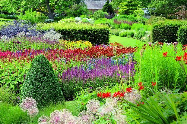 Four seasons in the garden of the prairie. Multicolor mix krokosmii, Garlic, sage, amsonii, dzielżanu and Rdestowa / photo. Danuta Młoźniak. Cztery pory roku w ogrodzie preriowym