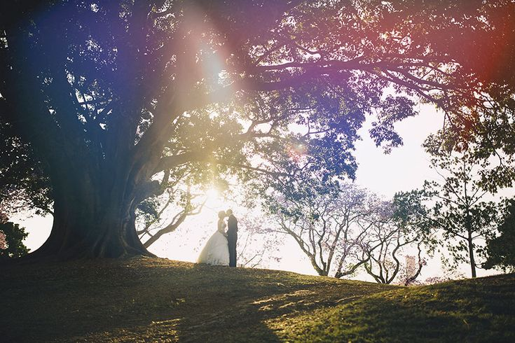 Photos of Brisbane Wedding   Zach and Tara under fig tree by www.richardgrainger.com.au
