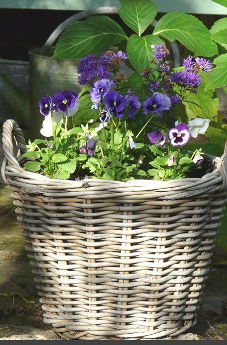 Pansies planted in wicker basket