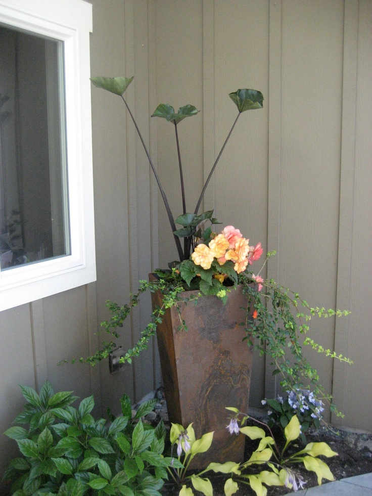 steel pot planted in a shady spot