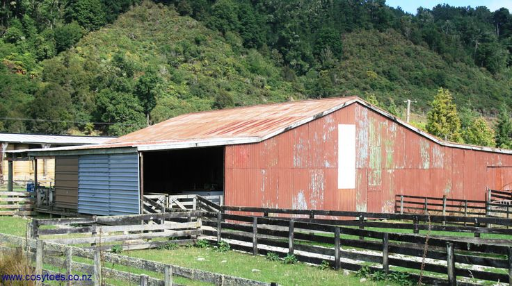 woolshed www.cosytoes.co.nz