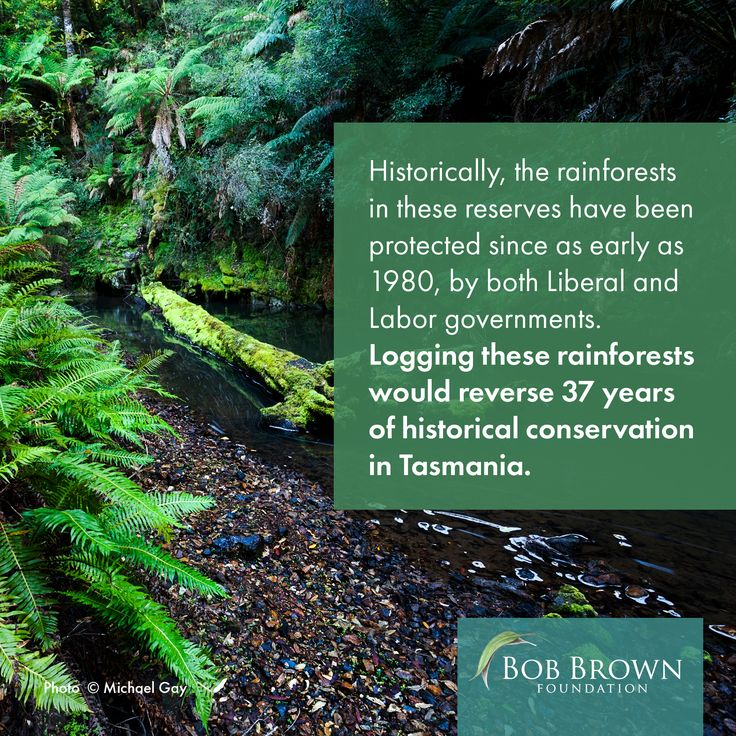 In 2014 the Hodgman Liberal government weakened the status of regional reserves and conservation areas, effectively allowing for these reserves to be logged. The government is pushing to begin logging inside these reserves as early as October 2018. Tell the Tasmanian government that rainforest logging has to end.  Send an email to the Tasmanian government through our website at:  bobbrown.org.au/norainforestlogging