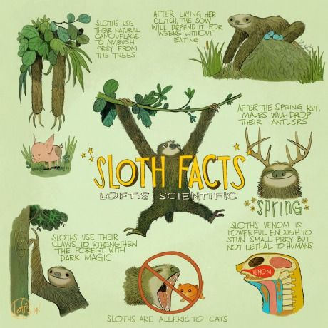 Sloth facts.