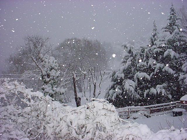Tennis sulla neve - Snow Tennis - YouTube