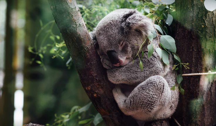 Top Family Attractions on the Gold Coast