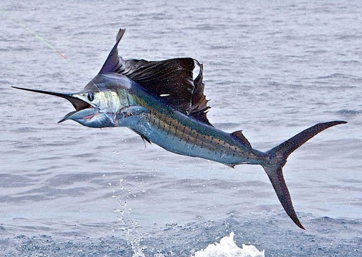 beautiful offshore fishing photos
