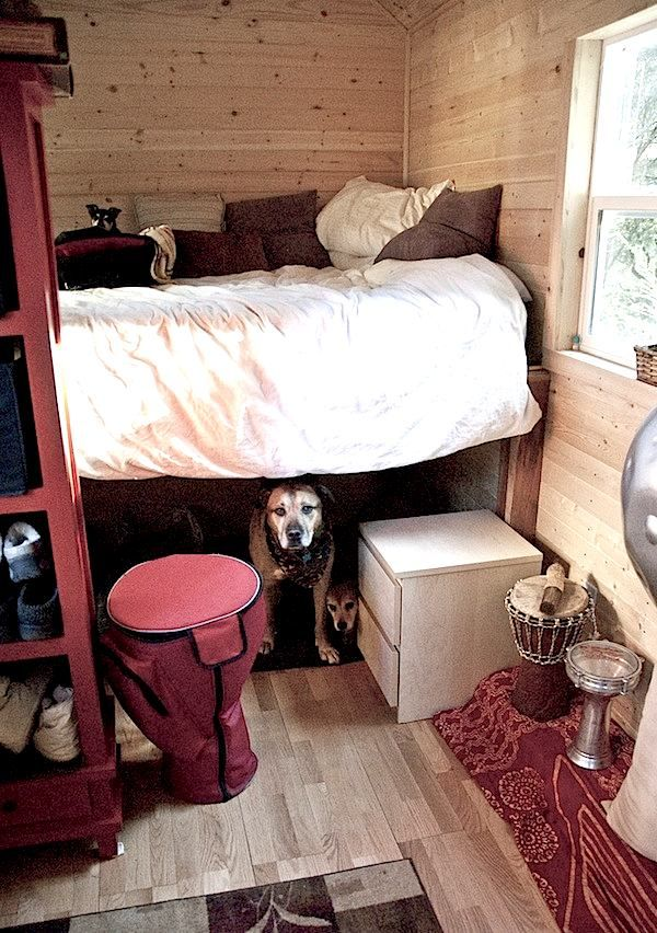 Big Dogs Living with you in a Tiny House?