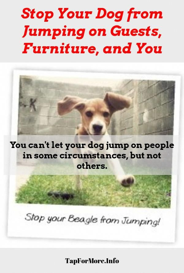 Stop Dog Jumping And Teach Dog Not To Jump Check The Pic For