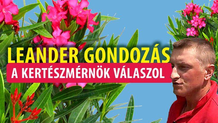 A Leander gondozása - kertészet, Budapest