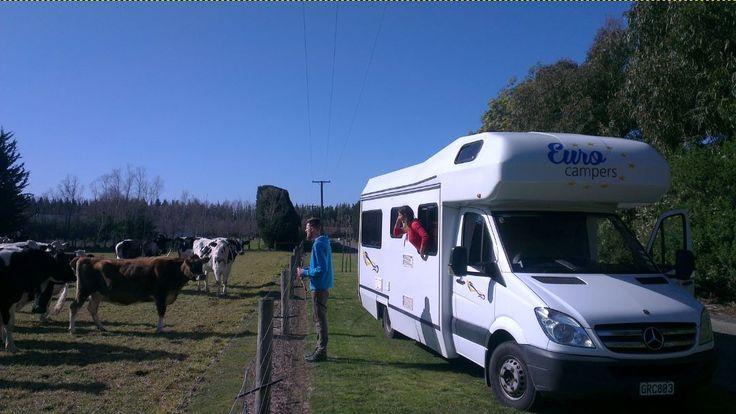 Went on a little trip to make pictures of the Eco Familia, but the cows stole the show... #SpringinNZ  Der Frühling ist im Anmarsch. Wir sind die Tage losgefahren, um Fotos von unserem großen Eco Familia zu machen.. Wurden dann aber von den Kühen erfolgreich von der Arbeit abgehalten:)