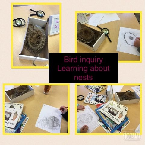 Natural Curiosity in FDK: Interactive Math Board for Surveys and our Bird In...
