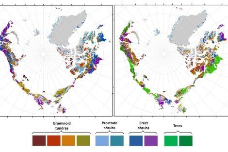 A la derecha, predicción de la distribución de la vegetación en 2050.  R. Pearson