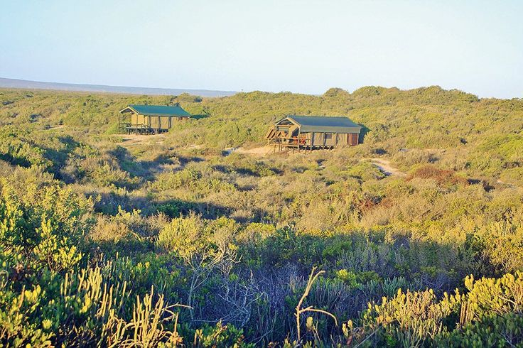 west-coast-luxury-tents