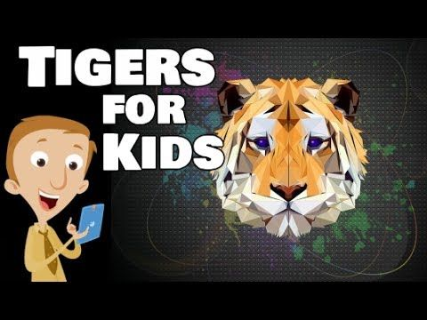 Tigers For Kids | Educational Tiger Video | Homeschool Pop