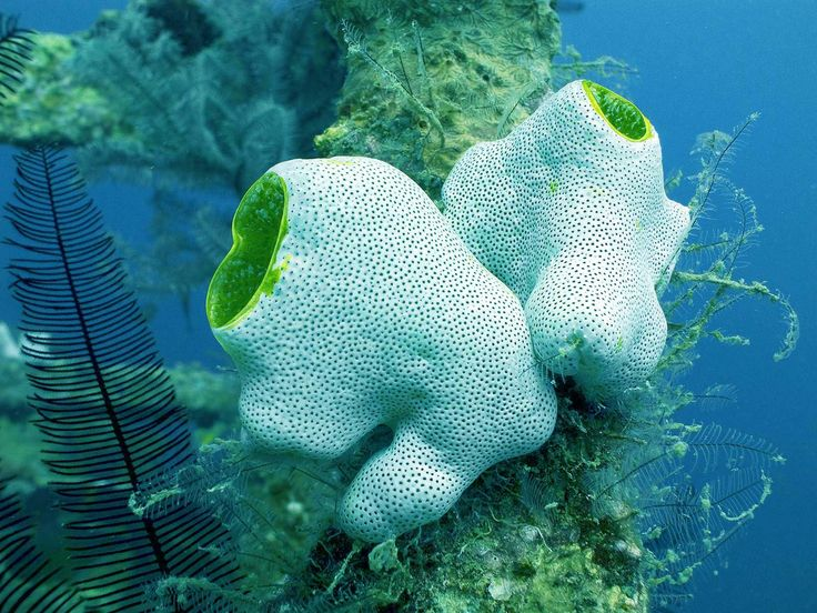 Best Marine Biology Stuff Images On   Marine Biology