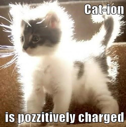Cat-Ions are pozzitively charged! I get it because I'm actually doing good in Chem this semester.. Go Me...