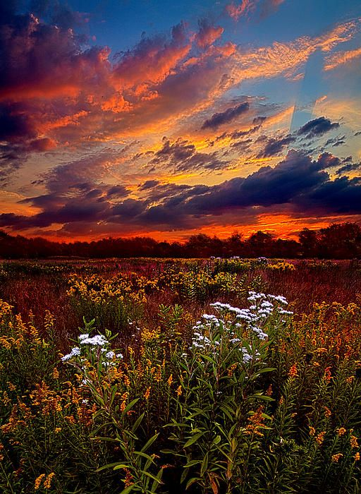 ☀Beating Hearts by Phil Koch
