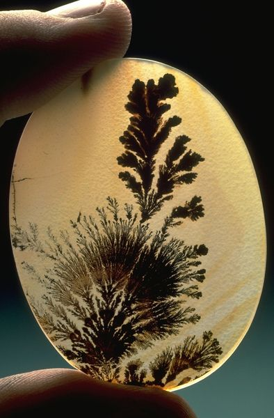 Atransluscent oval of dendritic agate. If you're ever in D.C. stop in at the Smithsonian Gem Gallery - it is unbelievable.
