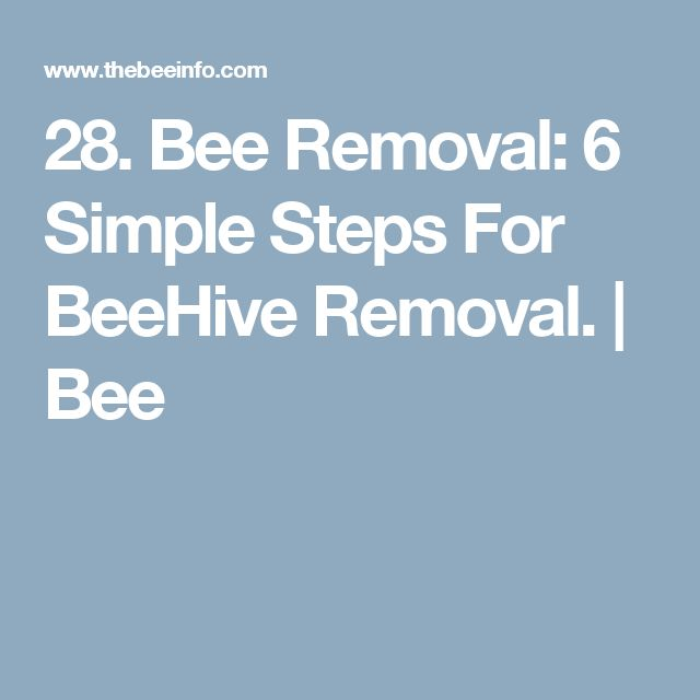 28. Bee Removal: 6 Simple Steps For BeeHive Removal. | Bee
