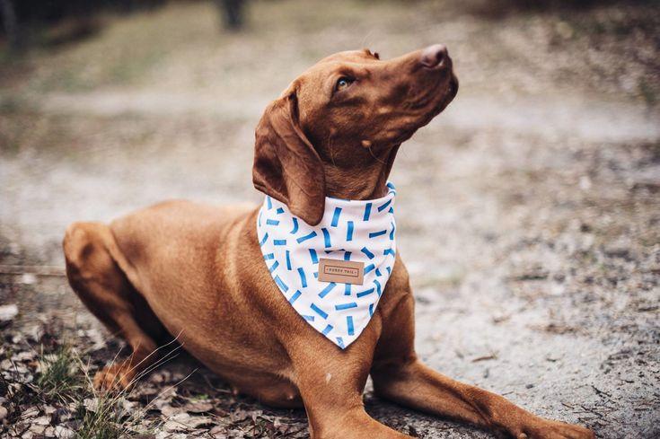 Stylowe obroże i akcesoria dla psów — Delicje.me | Internetowy magazyn o designie i kulturze discovered&pinned by: @agatumi