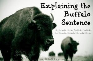 "An explanation of the grammatical correctness of the sentence, ""Buffalo buffalo Buffalo buffalo buffalo buffalo Buffalo buffalo."""