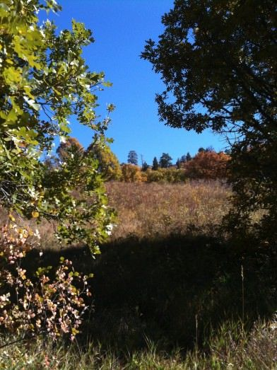 Three Easy Trails at Castlewood Canyon State Park