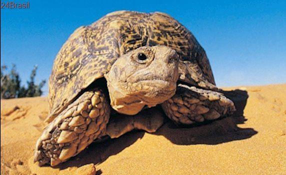 Fuzileiros navais removem tartarugas de seus habitats e ameaçam sua sobrevivência