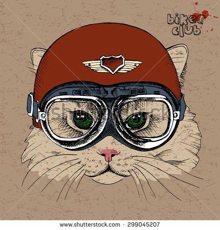 Cat ilustracji stockowych i animacji   Shutterstock